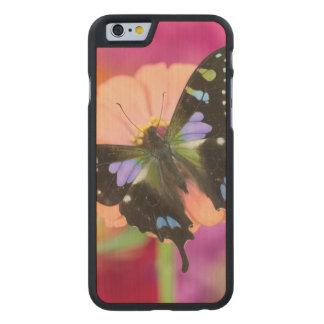 Sammamish Washington Fotografie von Schmetterling Carved® iPhone 6 Hülle Ahorn