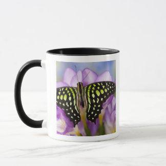 Sammamish, Washington. Tropische Schmetterlinge 44 Tasse