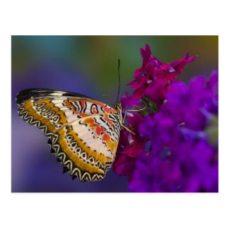 Sammamish, Washington. Tropische Schmetterlinge 64 Postkarte