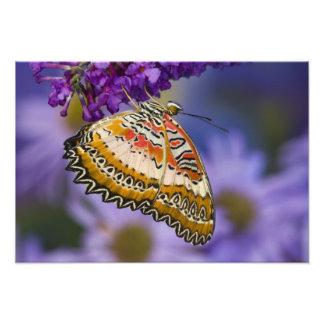 Sammamish, Washington. Tropische Schmetterlinge 7 Foto