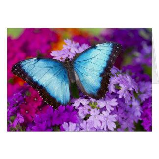 Sammamish Washington tropischer Schmetterling 7 Karte