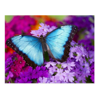 Sammamish Washington tropischer Schmetterling 7 Postkarte