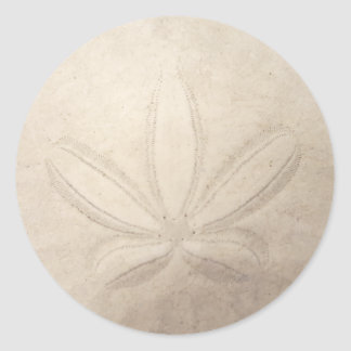 Sand-Dollar-runder Aufkleber