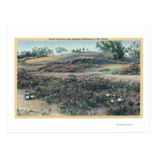 Sand-Verbenen und Wüsten-Abends-Primeln Postkarte