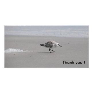 Sanderling, danke! photokartenvorlage