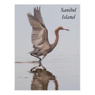 Sanibel rötliche Reiher-Postkarte Postkarte