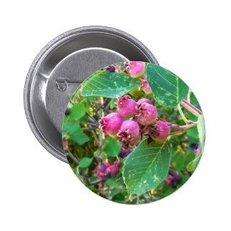Saskatoons 2 ¼ Zoll-runder Knopf Runder Button 5,1 Cm