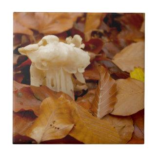 SATTELcommon helvel des weißen Sattels Elfen Kleine Quadratische Fliese
