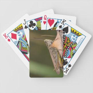 Sauterelle de champ commun jeu de cartes
