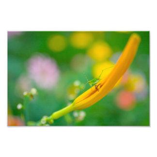 Sauterelle et fleurs impression photo