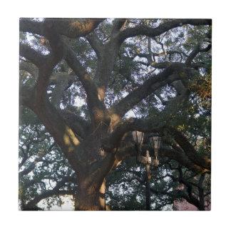 Savanne-Eiche Kleine Quadratische Fliese