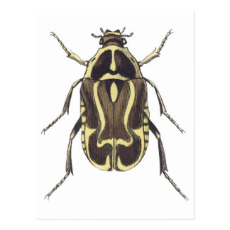 Scarabäus-Käfer Postkarte