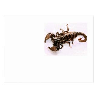 Scaremail Postkarte (Skorpion)