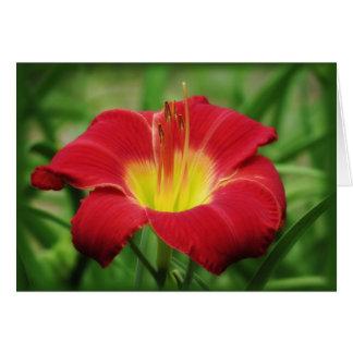 Scarlet-Blüte - Taglilie Karte