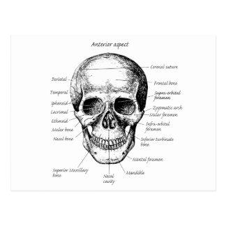 Schädel führt Gesicht einzeln auf Postkarte