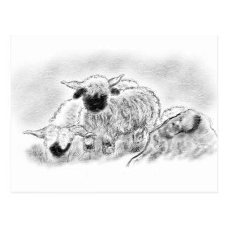 Schaf-Illustration Wallis Blacknose Postkarte