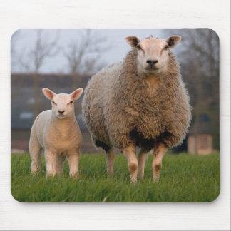 Schaf-und Lamm-Vieh Mousepads