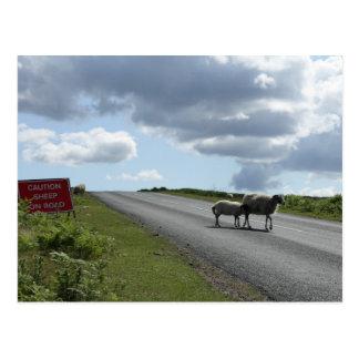 Schafe auf Straße Postkarte
