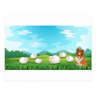 Schafe und Jagdhund Postkarte