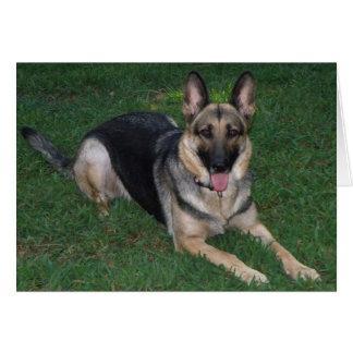 Schäferhund Grußkarte