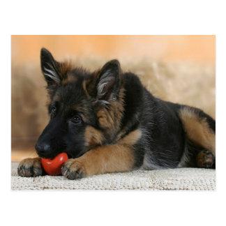 Schäferhund-Hundeentwurf Postkarte