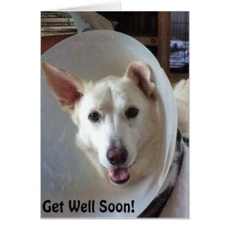 Schäferhund-Rettung zentrales Texas erhalten wohle Mitteilungskarte