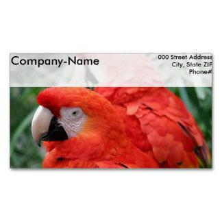 Scharlachrot Macaw- Visitenkartenmagnet