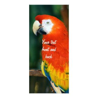 Scharlachrot Macaw- Werbekarte