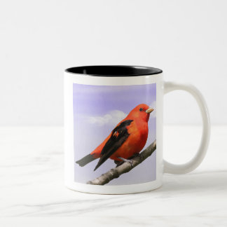 Scharlachrot Tanager- Zweifarbige Tasse