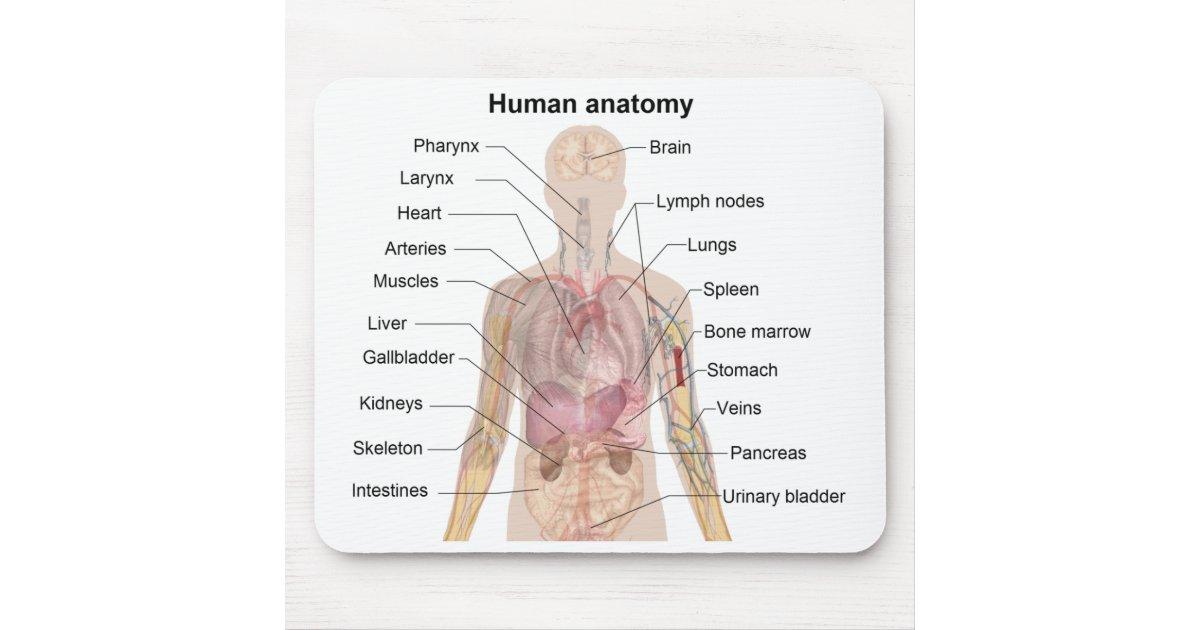 Schatten-Diagramm der menschlichen Anatomie Mousepad | Zazzle.ch
