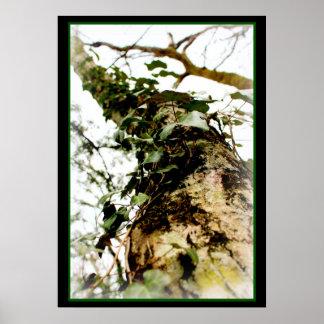 schäumt Wald Efeubaum Naturkunst zu postieren Poster