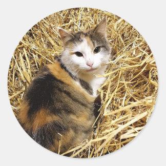 Scheunen-Katzen-Foto-Aufkleber Runder Aufkleber