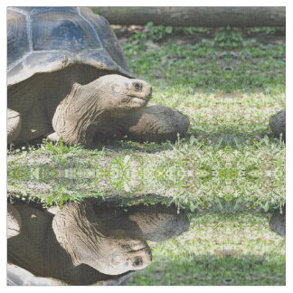 Schildkröte 586 stoff