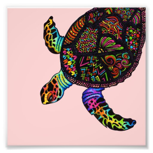 Schildkröte Foto Drucke