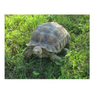 Schildkröte im Gras Postkarte