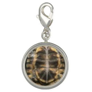Schildkröte-Muschel Foto Charms