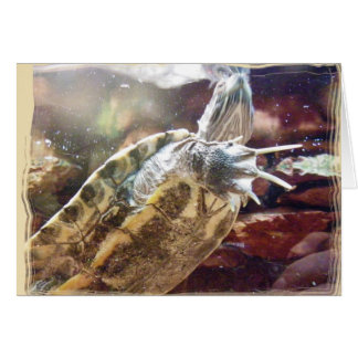 Schildkröte-Nägel Karte