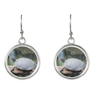 Schildkröte Ohrringe