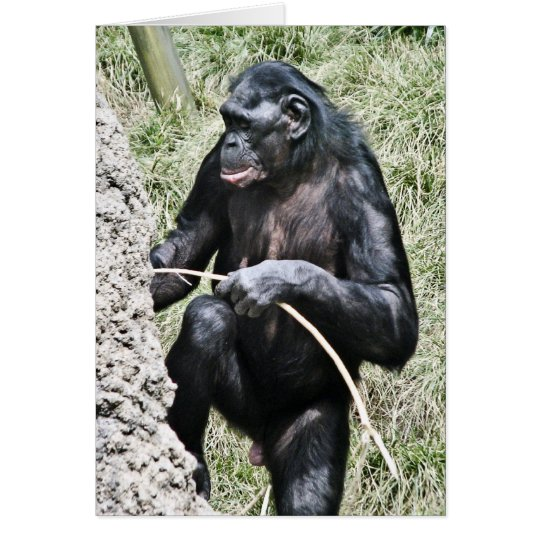 Schimpanse-Foto w, das Thomas Alva Edison Zitat Karte
