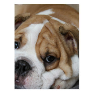 Schlafenbulldoggen-Postkarte Postkarte
