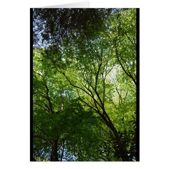 Schläfrige hohle Bäume Mitteilungskarte