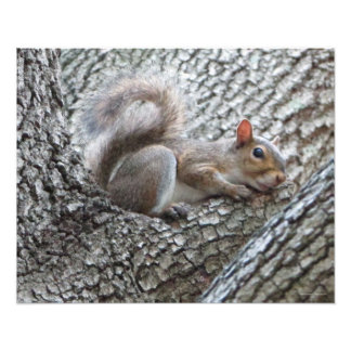 Schläfriger Eichhörnchen-Foto-Druck Fotodruck