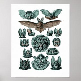 Schläger durch Ernst Haeckel Poster