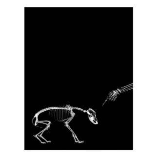 Schlechtes Hunderöntgenstrahl-Skelett in Schwarzem Postkarten