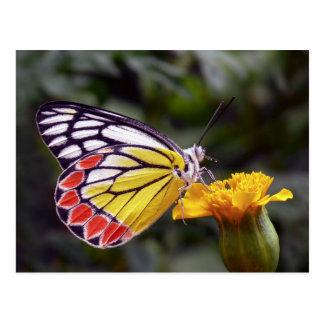 Schmetterling, allgemeine JezebelmakroFoto Postkarte