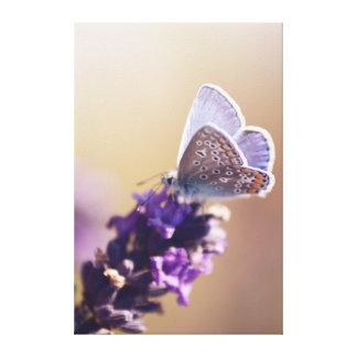 Schmetterling auf einem Lavendelbißchen Leinwanddruck