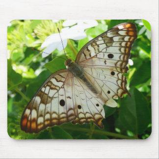 Schmetterling auf Jasmin-tropischer Mousepads