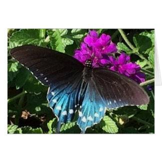 Schmetterling auf lila Verbene-Gruß-Karte Karte