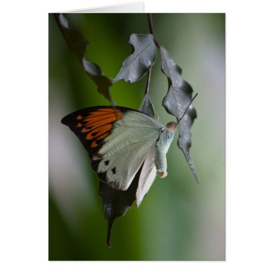 Schmetterling Mitteilungskarte