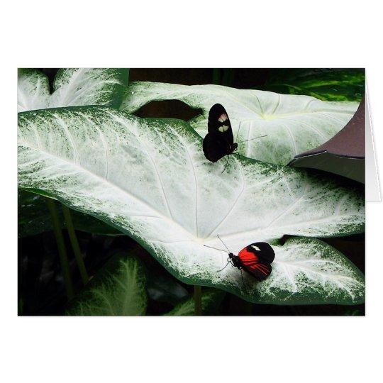 Schmetterlinge auf weißen Caladiums Karte